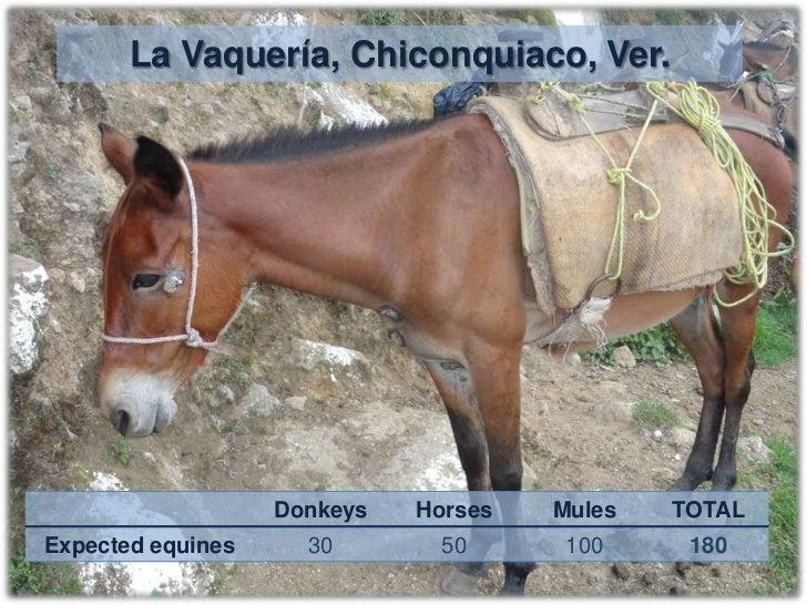 Ursulo Galvan/El Ciervo, V de A, Veracruz.             1.5 h from CEIEGT                                       Day 4      ...