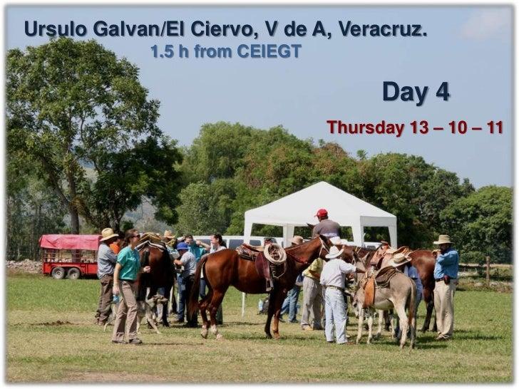 Ursulo Galvan, Vega de Alatorre, Ver.                   Donkeys   Horses   Mules   TOTALExpected equines     40        40 ...