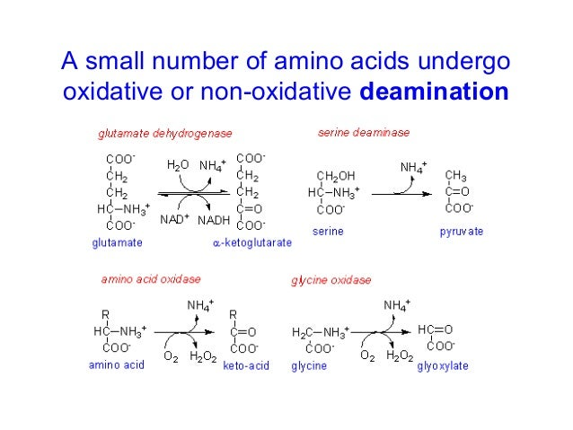 AMINO ACID OXIDATION EPUB DOWNLOAD