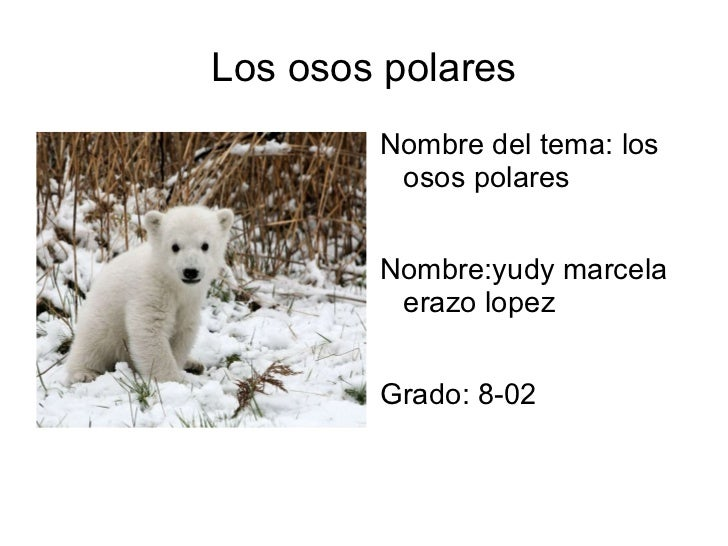 Los osos polares <ul><li>Nombre del tema: los osos polares
