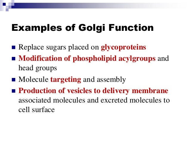 Stpm Form 6 Biology Er Golgi Apparatus Lysosome