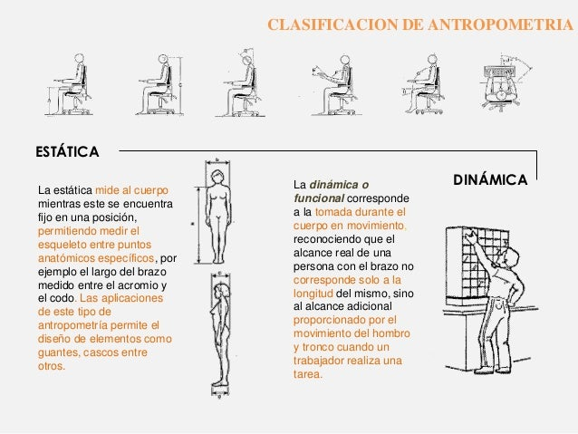 Ergonomia y antropometria for Antropometria y ergonomia en arquitectura