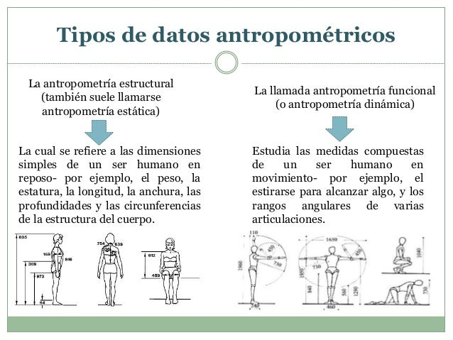 Ergonomia unidad 4 gesti n empresarial for Medidas ergonomicas del cuerpo humano