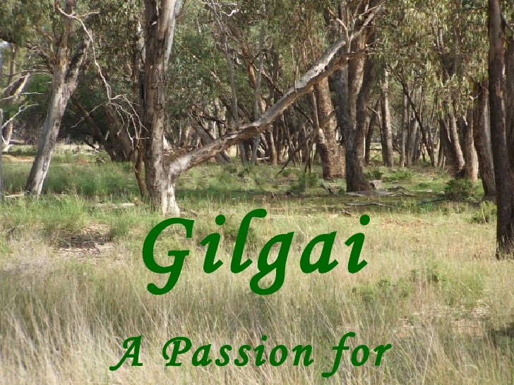 Gilgai A Passion for Solutions