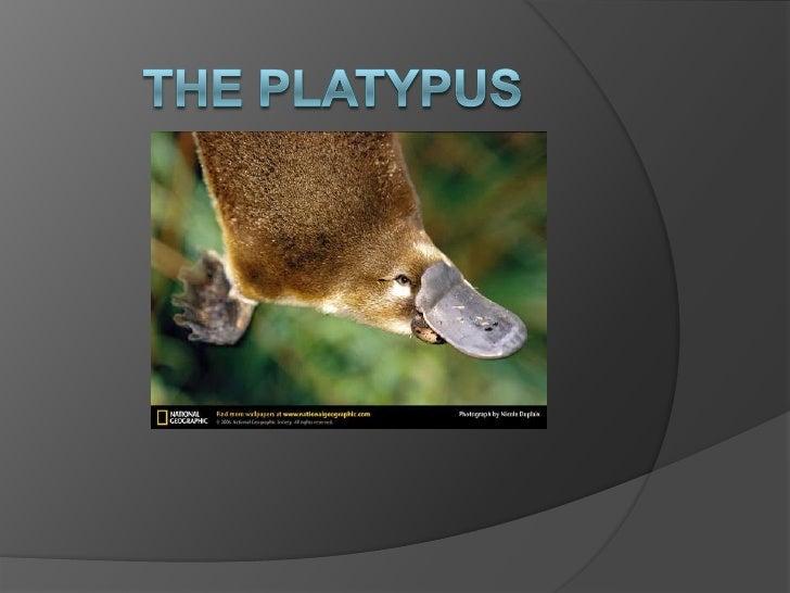 The platypus<br />