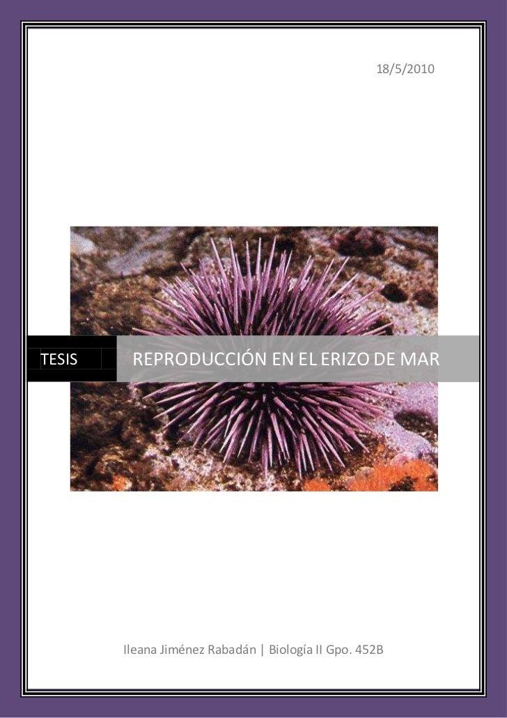 18/5/2010Ileana Jiménez Rabadán | Biología II Gpo. 452BcentercenterTESISREPRODUCCIÓN EN EL ERIZO DE MAR<br />ERIZOS DE MAR...