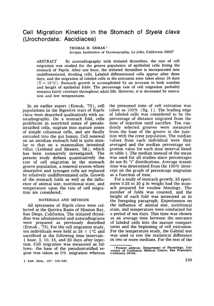 Cell Migration Kinetics in the Stomach of Styela clava(Urochordata: Asc id iacea)                                    THOMA...