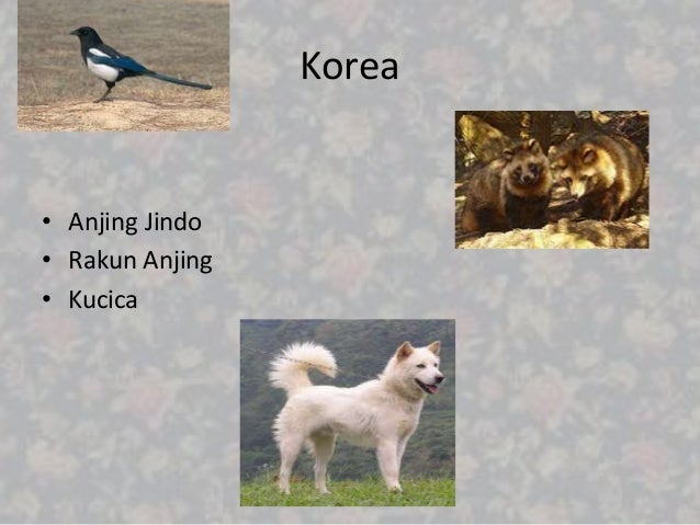 Download 980 Gambar Fauna Paleartik Terbaru