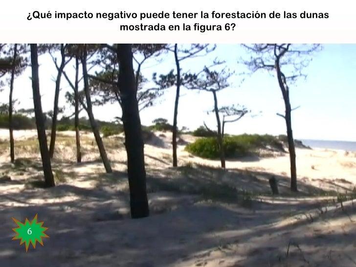 ¿Qué impacto negativo puede tener la forestación de las dunas                 mostrada en la figura 6?                    ...