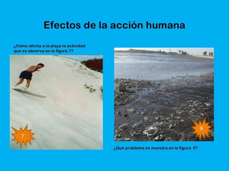 Efectos de la acción humana¿Cómo afecta a la playa la actividadque se observa en la figura 7?                             ...