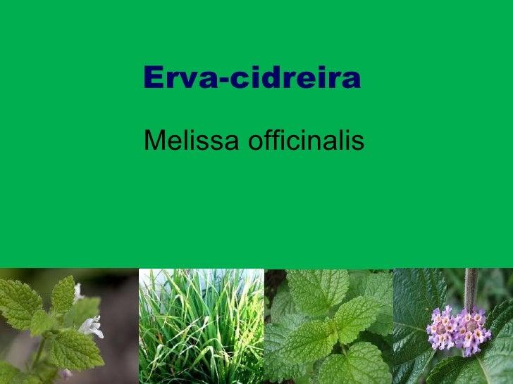 Erva-cidreira Melissa officinalis