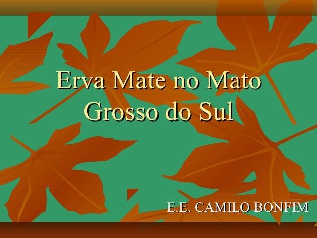 Erva Mate no Mato  Grosso do Sul         E.E. CAMILO BONFIM