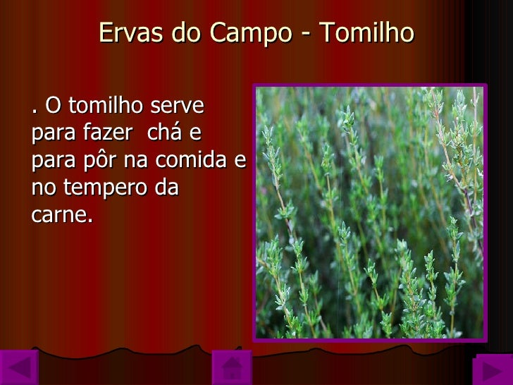 Ervas Aromaticas Florbela Slide 3
