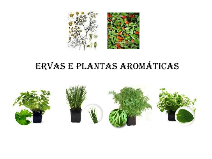 Ervas e plantas arom ticas for Asociacion de plantas aromaticas