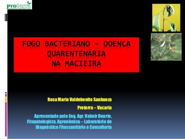 FOGO BACTERIANO –DOENÇA QUARENTENÁRIANA MACIEIRA  Rosa Maria ValdebenitoSanhueza  Proterra–Vacaria  ApresentadopeloEng. Ag...