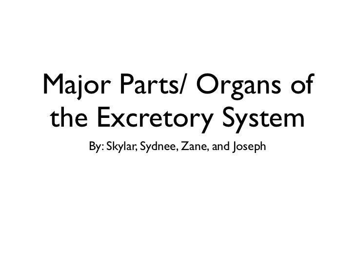 Major Parts/ Organs ofthe Excretory System   By: Skylar, Sydnee, Zane, and Joseph