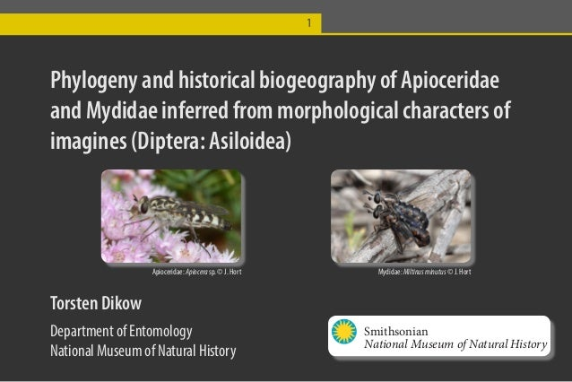 1Phylogeny and historical biogeography of Apioceridaeand Mydidae inferred from morphological characters ofimagines (Dipter...