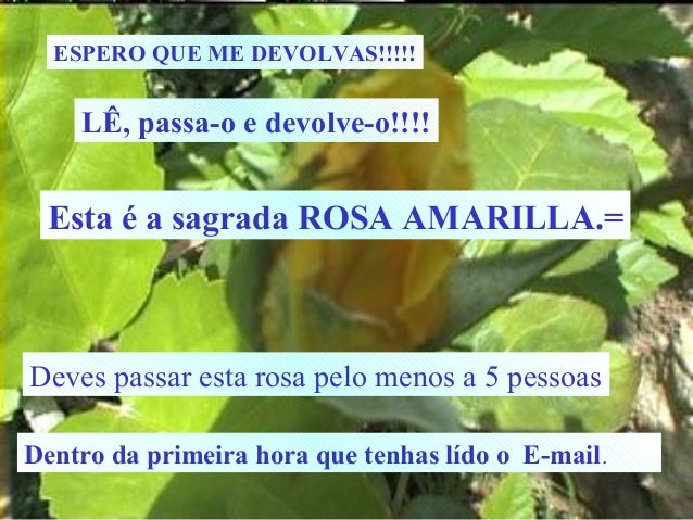 ESPERO QUE ME DEVOLVAS!!!!!  LÊ, passa-o e devolve-o!!!!  Esta é a sagrada ROSA AMARILLA.=  Deves passar esta rosa pelo me...