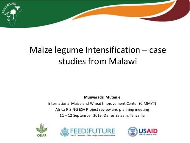 Maize legume Intensification – case studies from Malawi Munyaradzi Mutenje International Maize and Wheat Improvement Cente...