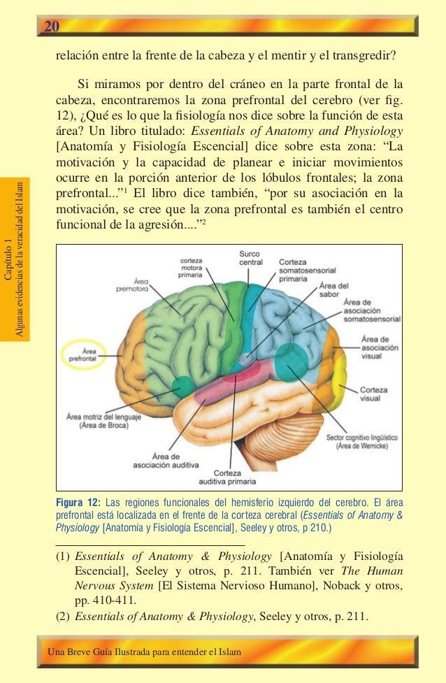20  relación entre la frente de la cabeza y el mentir y el transgredir? Si miramos por dentro del cráneo en la parte front...