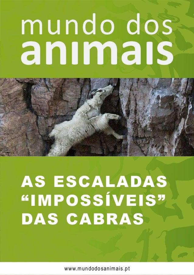 """AS ESCALADAS """"IMPOSSÍVEIS"""" DAS CABRAS www.mundodosanimais.pt"""