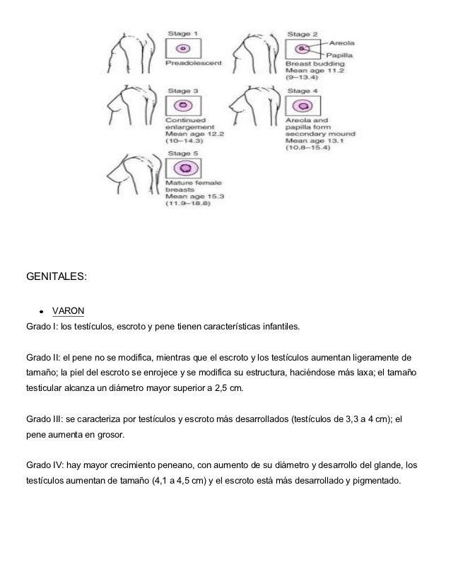 GENITALES:       VARONGrado I: los testículos, escroto y pene tienen características infantiles.Grado II: el pene no se mo...