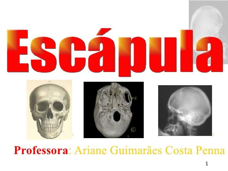 <ul><ul><li>Professora : Ariane Guimarães Costa Penna </li></ul></ul>Escápula 1 3 2