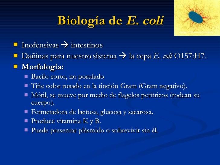 E. coli (Escherichia coli) infection