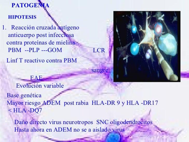 PATOGENIA HIPOTESIS <ul><li>Reacción cruzada antígeno </li></ul><ul><li>anticuerpo post infecciosa  </li></ul><ul><li>cont...