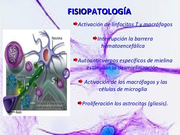 <ul><li>Activación de linfocitos T y macrófagos </li></ul><ul><li>Interrupción la barrera hematoencefálica </li></ul><ul><...