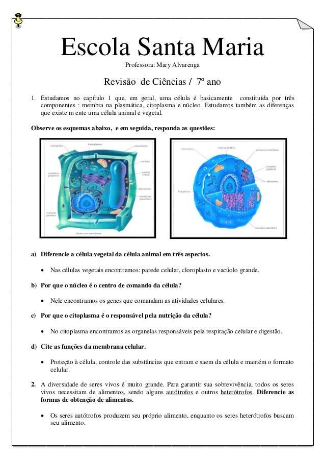 Escola Santa Maria Professora: Mary Alvarenga  Revisão de Ciências / 7º ano 1. Estudamos no capítulo 1 que, em geral, uma ...