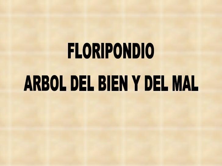 FLORIPONDIO ARBOL DEL BIEN Y DEL MAL