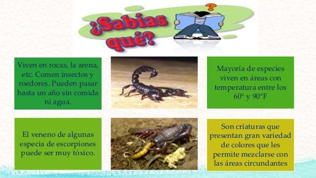 Escorpiones - Donde viven los acaros ...