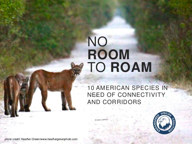 NO ROOM TO ROAM 10 AMERICAN SPECIES IN NEED OF CONNECTIVITY AND CORRIDORS photo credit: Heather Green/www.heathergreenphot...