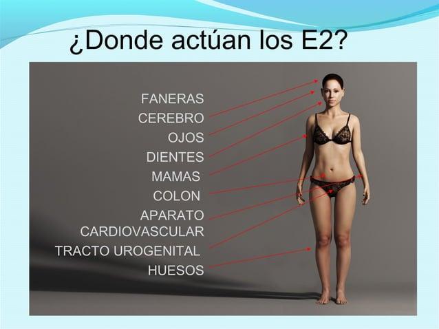 ¿Donde actúan los E2?FANERASCEREBROOJOSDIENTESMAMASCOLONAPARATOCARDIOVASCULARTRACTO UROGENITALHUESOS