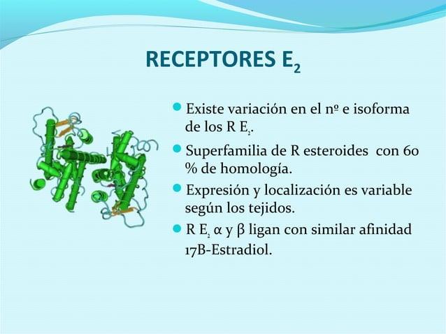 RECEPTORES E2Existe variación en el nº e isoformade los R E2.Superfamilia de R esteroides con 60% de homología.Expresió...