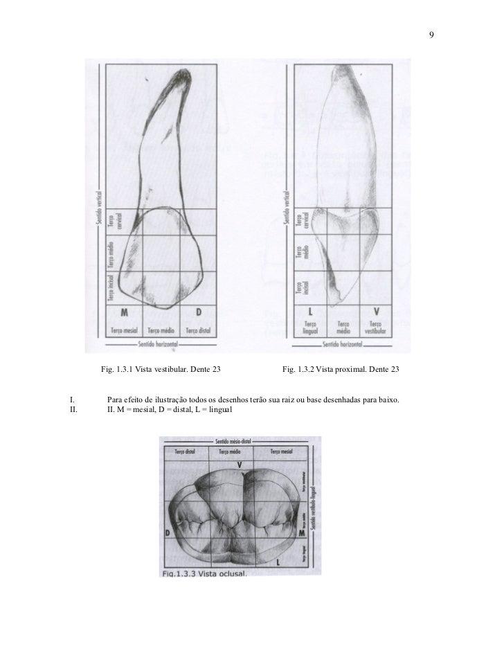 9      Fig. 1.3.1 Vista vestibular. Dente 23                 Fig. 1.3.2 Vista proximal. Dente 23I.     Para efeito de ilus...