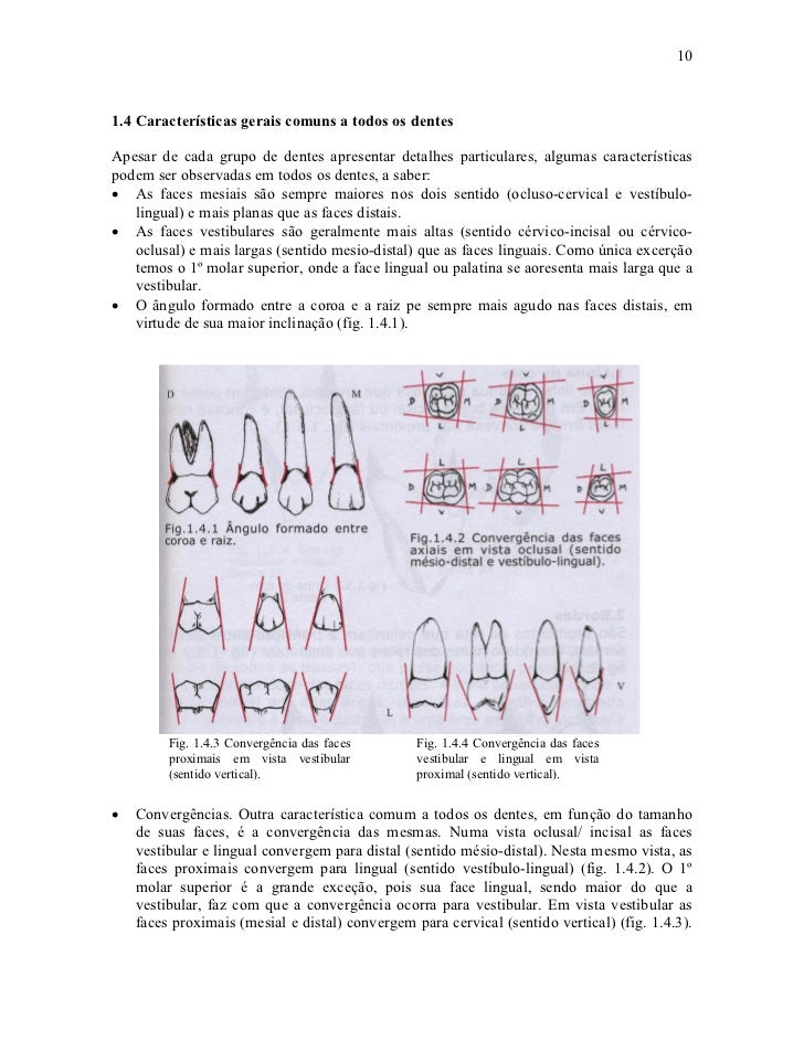 101.4 Características gerais comuns a todos os dentesApesar de cada grupo de dentes apresentar detalhes particulares, algu...