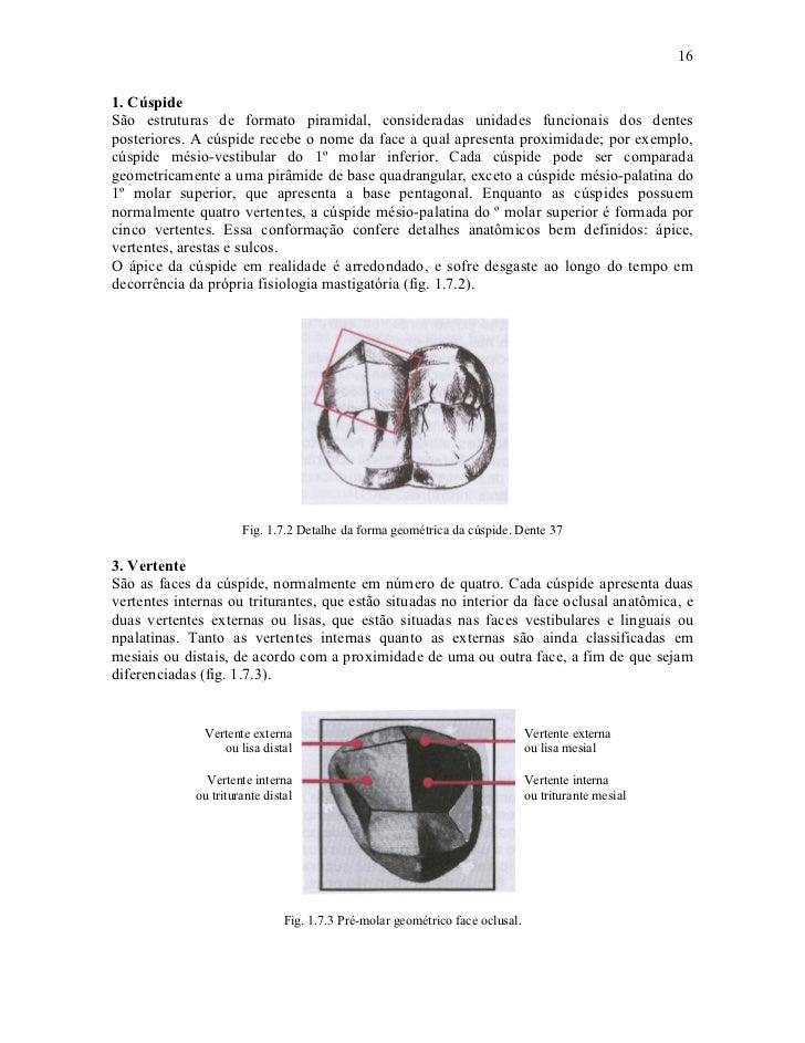 161. CúspideSão estruturas de formato piramidal, consideradas unidades funcionais dos dentesposteriores. A cúspide recebe ...