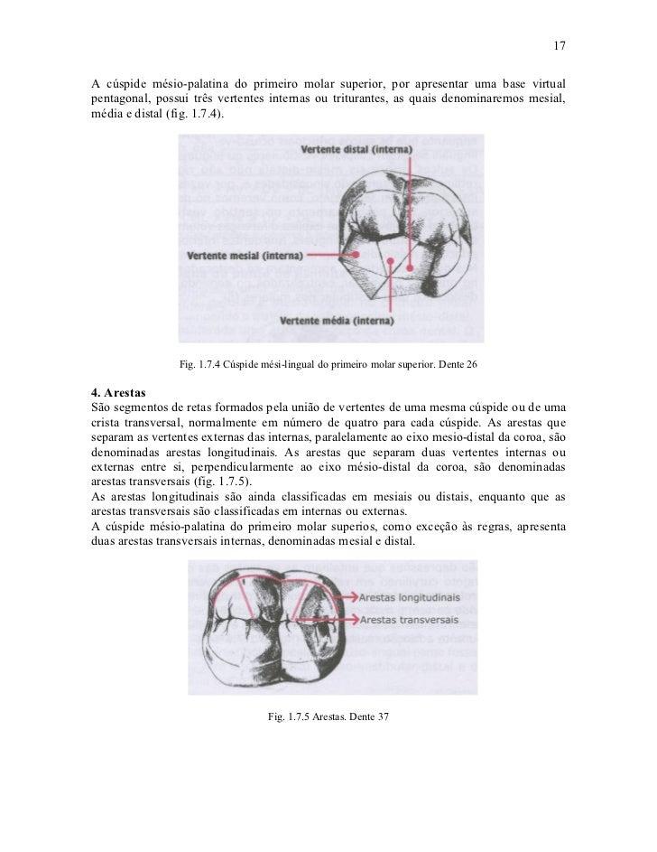 17A cúspide mésio-palatina do primeiro molar superior, por apresentar uma base virtualpentagonal, possui três vertentes in...