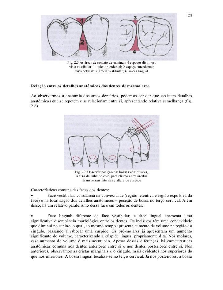 23                     Fig. 2.5 As áreas de contato determinam 4 espaços distintos;                      vista vestibular:...