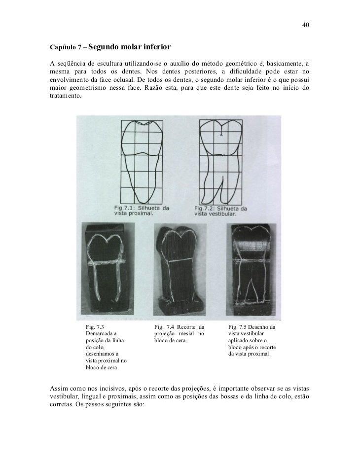 40Capítulo 7 – Segundo molar inferiorA seqüência de escultura utilizando-se o auxílio do método geométrico é, basicamente,...