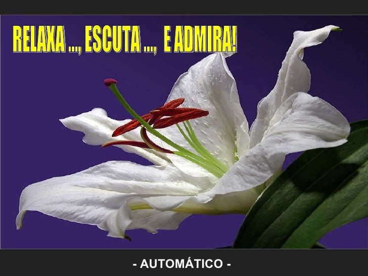 RELAXA ..., ESCUTA ...,  E ADMIRA! - AUTOMÁTICO -