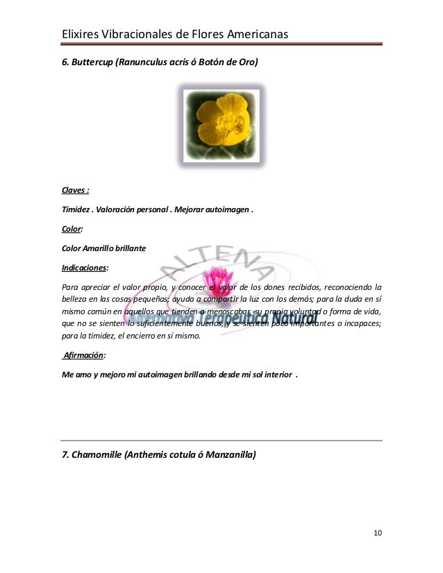 Elixires Vibracionales de Flores Americanas 10 6. Buttercup (Ranunculus acris ó Botón de Oro) Claves : Timidez . Valoració...
