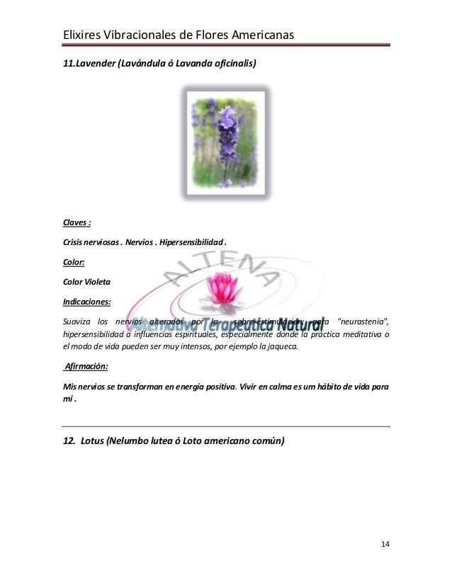 Elixires Vibracionales de Flores Americanas 14 11.Lavender (Lavándula ó Lavanda oficinalis) Claves : Crisis nerviosas . Ne...