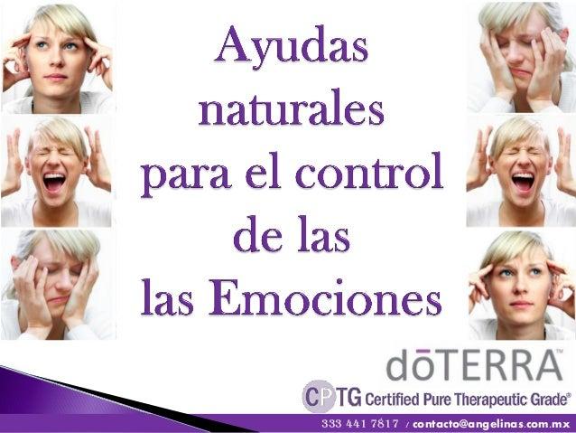 333 441 7817 / contacto@angelinas.com.mx