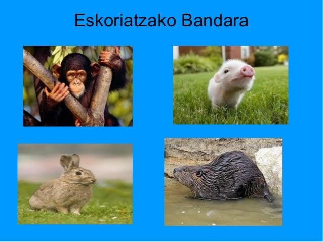 Eskoriatzako Bandara