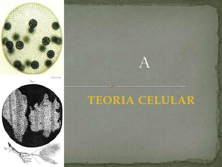 A<br />TEORIA CELULAR<br />