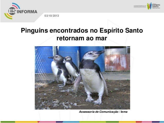 Assessoria de Comunicação / Iema 03/10/2013 Pinguins encontrados no Espírito Santo retornam ao mar