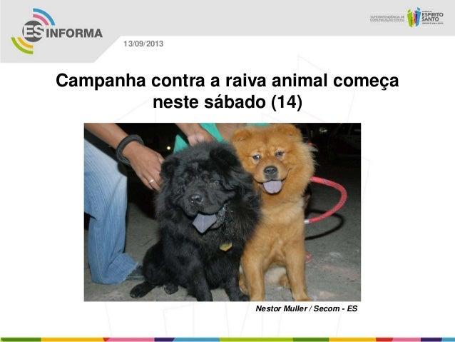 Nestor Muller / Secom - ES 13/09/2013 Campanha contra a raiva animal começa neste sábado (14)